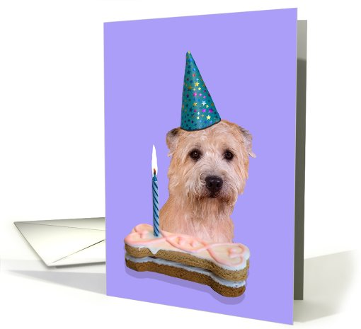 Birthday Card featuring a Glen of Imaal Terrier card (791903)