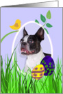 Easter Card featuring a Boston Terrier card