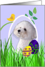 Easter Card featuring a Bichon Frise card