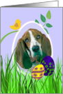 Easter Card featuring a Basset Hound card