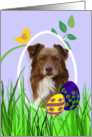 Easter Card featuring a red Australian Shepherd card