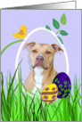 Easter Card featuring an American Staffordshire Terrier card