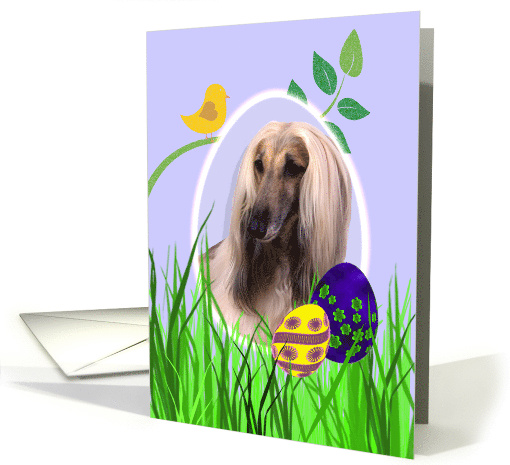 Easter Card featuring an Afghan Hound card (794281)