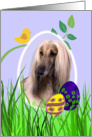Easter Card featuring an Afghan Hound card