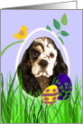 Easter Card featuring a parti/tri American Cocker Spaniel card