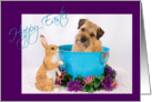 Happy Easter - featuring a Border Terrier w/ bunny friend card