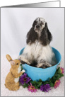 Happy Easter Card - featuring an American Cocker Spaniel card