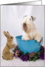 Happy Easter Card - featuring a Sealyham Terrier card