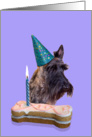 Birthday Card featuring a brindle Scottish Terrier card