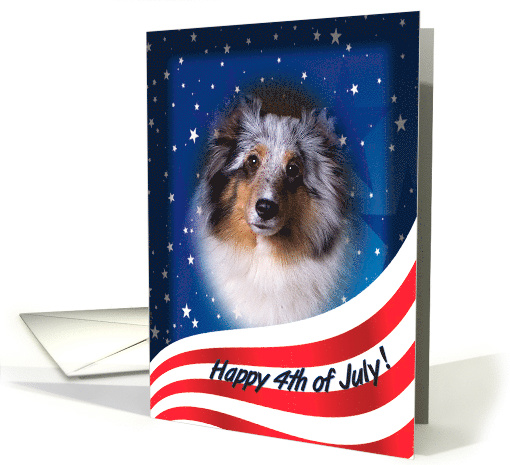 July 4th Card - featuring a blue merle Shetland Sheepdog card (824102)