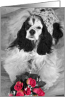 All Occasion card featuring a parti Cocker Spaniel with roses card