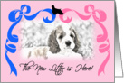 Cocker Spaniel New Litter Announcement card