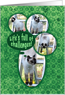 Encouragement for Life's Challenges Cat card