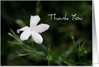 White Flower Business Thank You Card