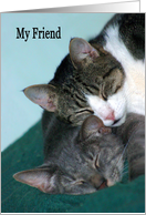 Thinking of You Friend two cats cuddling card