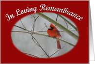 In Loving Remembrance cardinal on winter day card