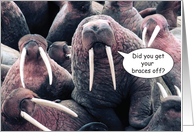 Braces Off, Walrus card