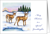 Christmas Money Card for Granddaughter, deer card