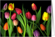 Thinking of you - Vibrant Colorful Spring Tulips on Black Background card