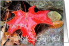 Happy Thanksgiving, Autumn Leaves card