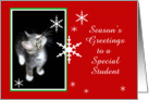 Kitten and Snowflakes, Student card