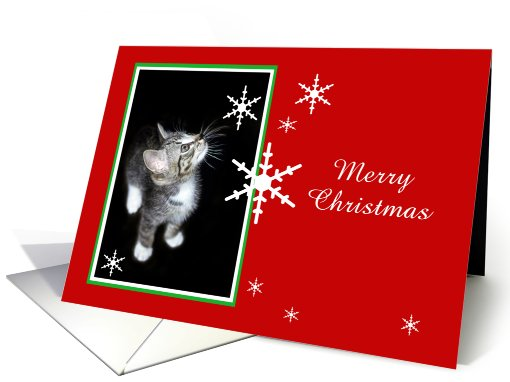 Kitten and Snowflakes, Merry Christmas card (494186)