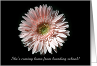 Pink Daisy, Coming Home from Boarding School card