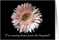 Pink Daisy, Coming Home card