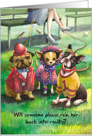 Dressed Up Dogs : Funny Anniversary card
