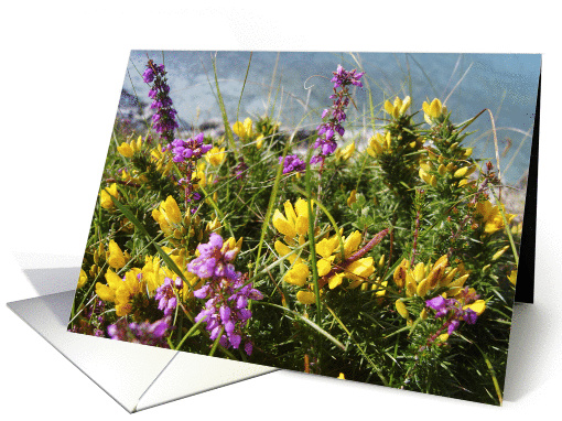 Heather and Gorse card (476609)