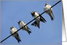 swallow chicks on a line card