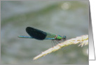 green and blue damselfly card
