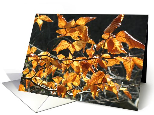 autumn leaves card (609112)