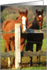 Horses at the gate card