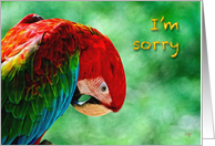 I'm Sorry Parrot Macaw Bird For Anyone card