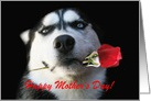 Happy Mother's Day Husky and Red Rose card