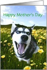 Happy Mother's Day Husky Dog in Flowers, Customizable card