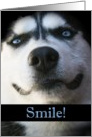 Smiling Husky Have a Happy Day card