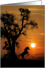 Horse in the Sunset Thinking of You Card