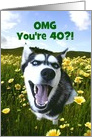 Funny Happy 40th Birthday Custom Cover with Cute Husky Dog card
