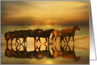 Horses on the Beach During Sunset Blank Note card