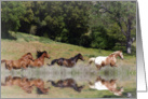 horses running free blank note card