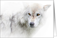 Winter Solstice Blessings Beautiful White Wolf card