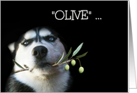 Funny Husky and Olive Branch Birthday Best Wishes card