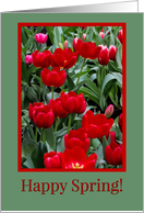 Happy Spring Beautiful Red an Pink Tulips Flowers card