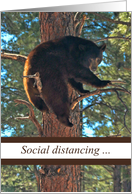 Funny Bear in Tree Social Distancing Missing You card