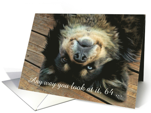 Cute and Humorous Custom Dog Happy 64th Birthday card (1642124)