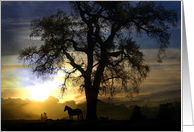 sunset horse silhouette sympathy card