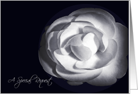 A Special Request Wedding White Rose card