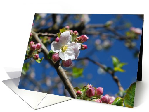 Apple Blossom time card (497632)